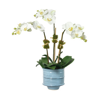Diane James Home White Phalaenopsis Orchid