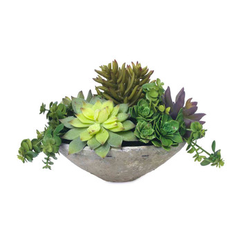 Diane James Home Blooms Echeveria in Clay Bowl