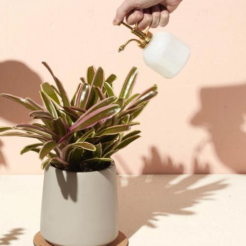 Modern Sprout Brass & Glass Mister