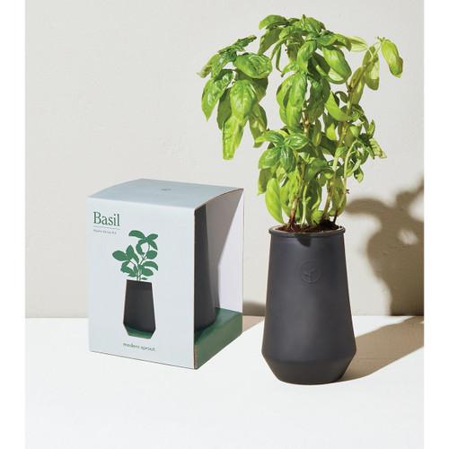 Modern Sprout Black Tapere Tumbler - Basil