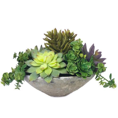 Diane James Blooms Echeveria In Clay Bowl