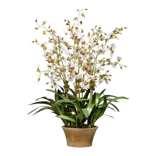 Diane James Cream Dancing Orchid 7 Stems In Berkshire Planter