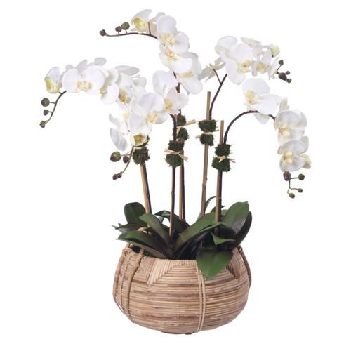 Diane James Cream Phalaenopsis Orchids 5 Stems In Cane Basket