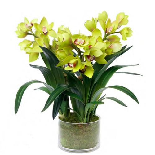 Diane James Green Cymbidium Orchid 3 Stems In Glass Cylinder