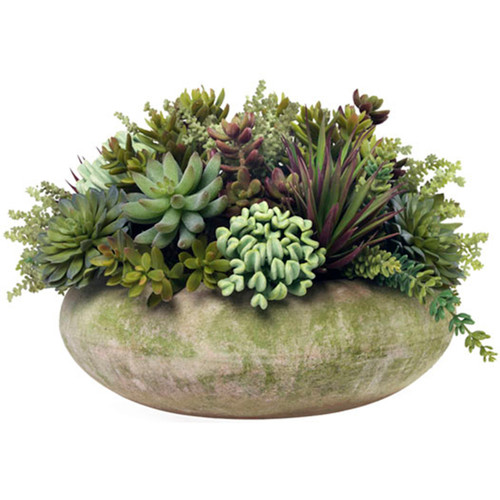 Diane James Large Succulent Planting In Mossed Bowl