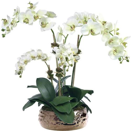 Diane James Pale Green Phalaenopsis 5 Stems In Bronze Bowl