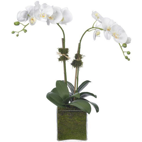 Diane James Phalaenopsis Orchid 2 Stems In Glass Cube