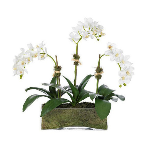 Diane James Phalaenopsis Orchid 3 Stems In Glass Rectangle