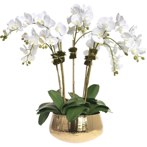 Diane James Phalaenopsis Orchid 5 Stems In Gold Bowl
