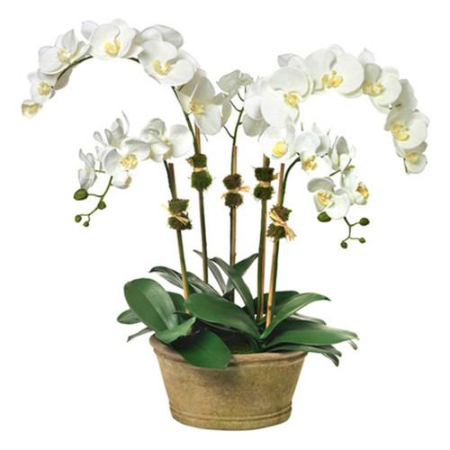 Diane James Phalaenopsis Orchid 5 Stems In Mossed Planter