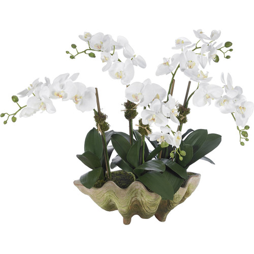 Diane James Phalaenopsis Orchid 5 Stems In Small Clam Shell