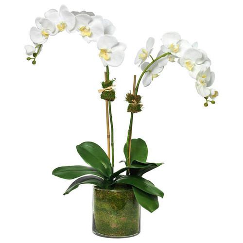 Diane James Phalaenopsis 2 Stems In Glass Cylinder
