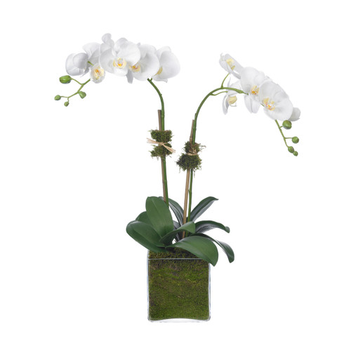 Diane James Home Moth Orchids in Glass Cube