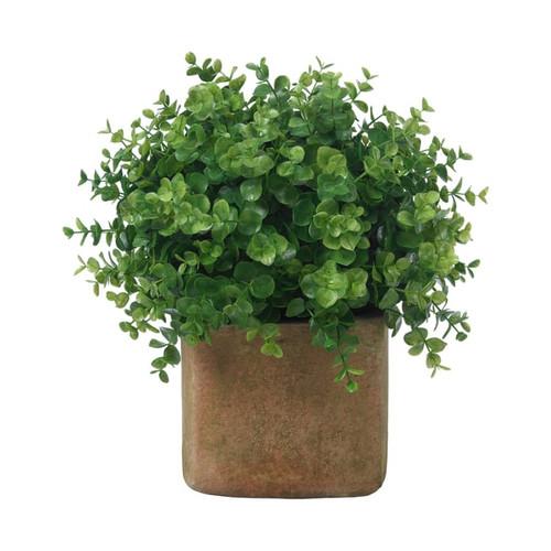 Diane James Home Boxwood Plant