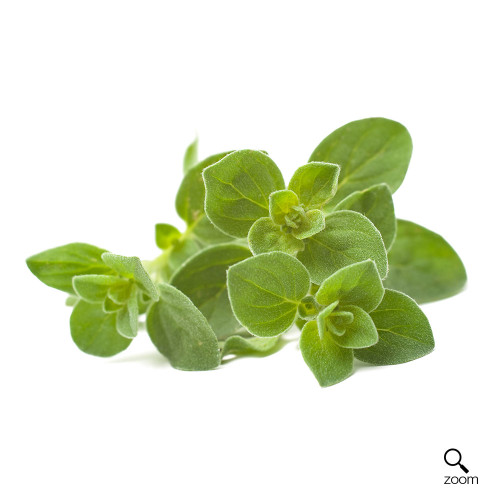 Oregano (1 Bunch)