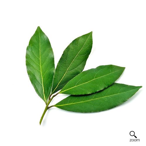Bay Leaf (1 bunch)