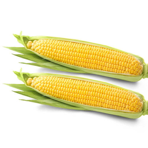 Corn on the Cob (Twin Pack)