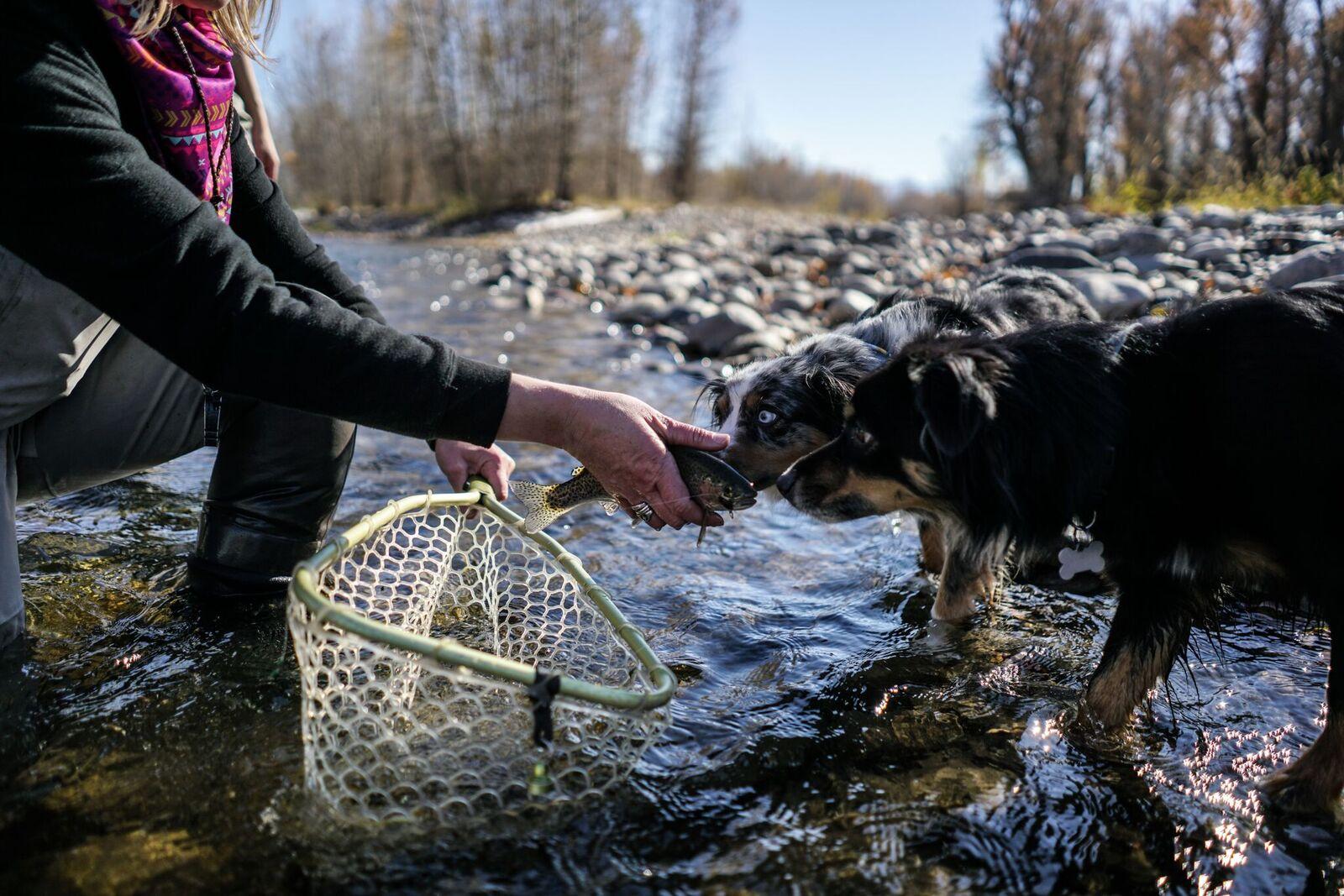 damsel fish dogs