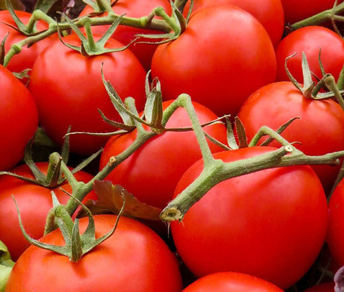 Tomato Large Red Cherry Organic Lycopersicon Esculentum Seeds