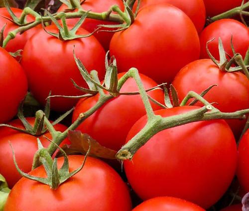 Tomato Large Red Cherry Organic Lycopersicon Esculentum Seeds