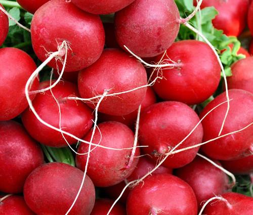 Radish Champion Organic Raphanus Sativus Seeds