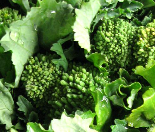 Broccoli Raab Early Fall Brassica Rapa Seeds
