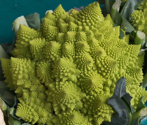 Broccoli Romanesco Brassica Oleracea Seeds