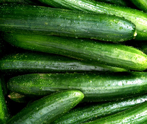 Cucumber Straight Eight Organic Cucumis Sativus Seeds
