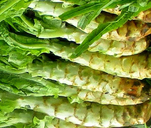 Lettuce Looseleaf Celtuce Lactuca Sativa Seeds