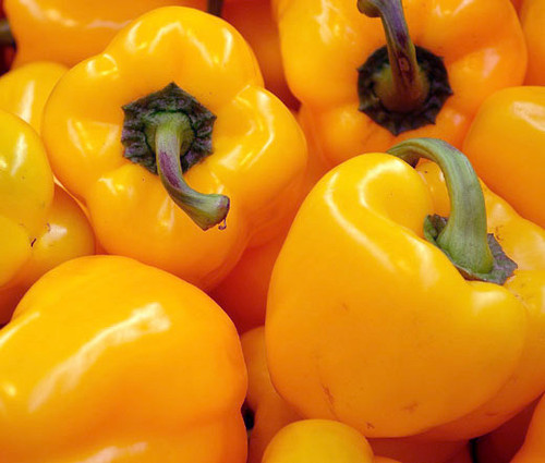 Pepper Sweet Golden California Wonder Organic Capsicum Annuum Seeds