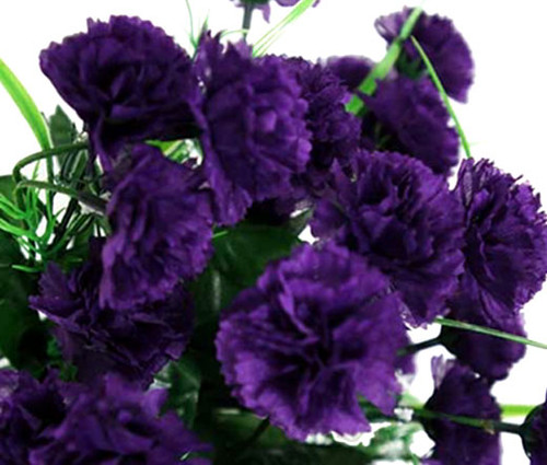 Carnation Grenadin King of Blacks Dianthus Caryophyllus Seeds