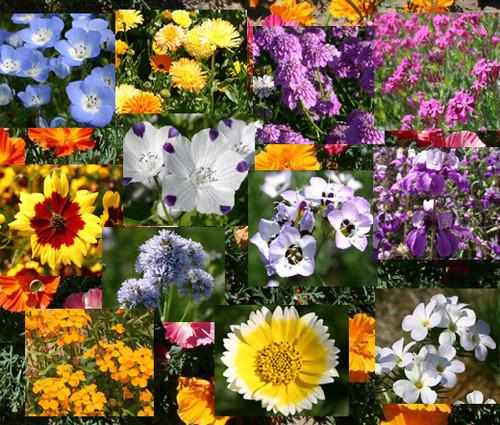 Wildflower Mix Bulb Blanket Seeds