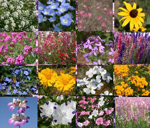 Wildflower Mix Shady Lane Seeds