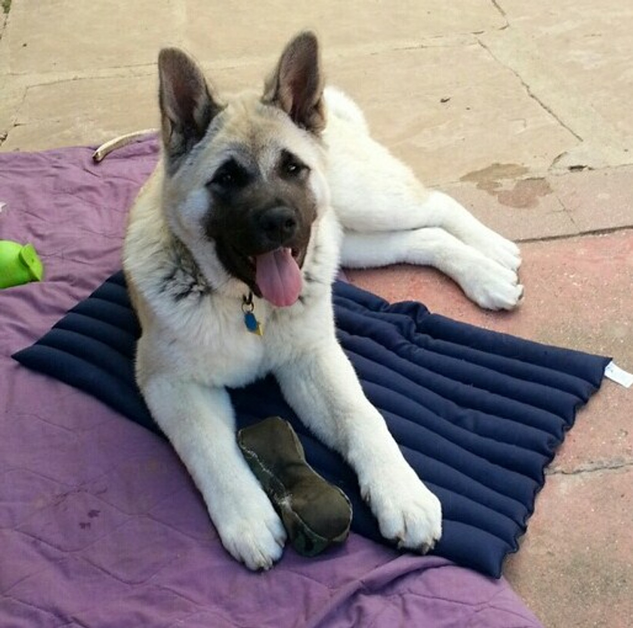 Cool kennel pad for a cool spot - without digging!