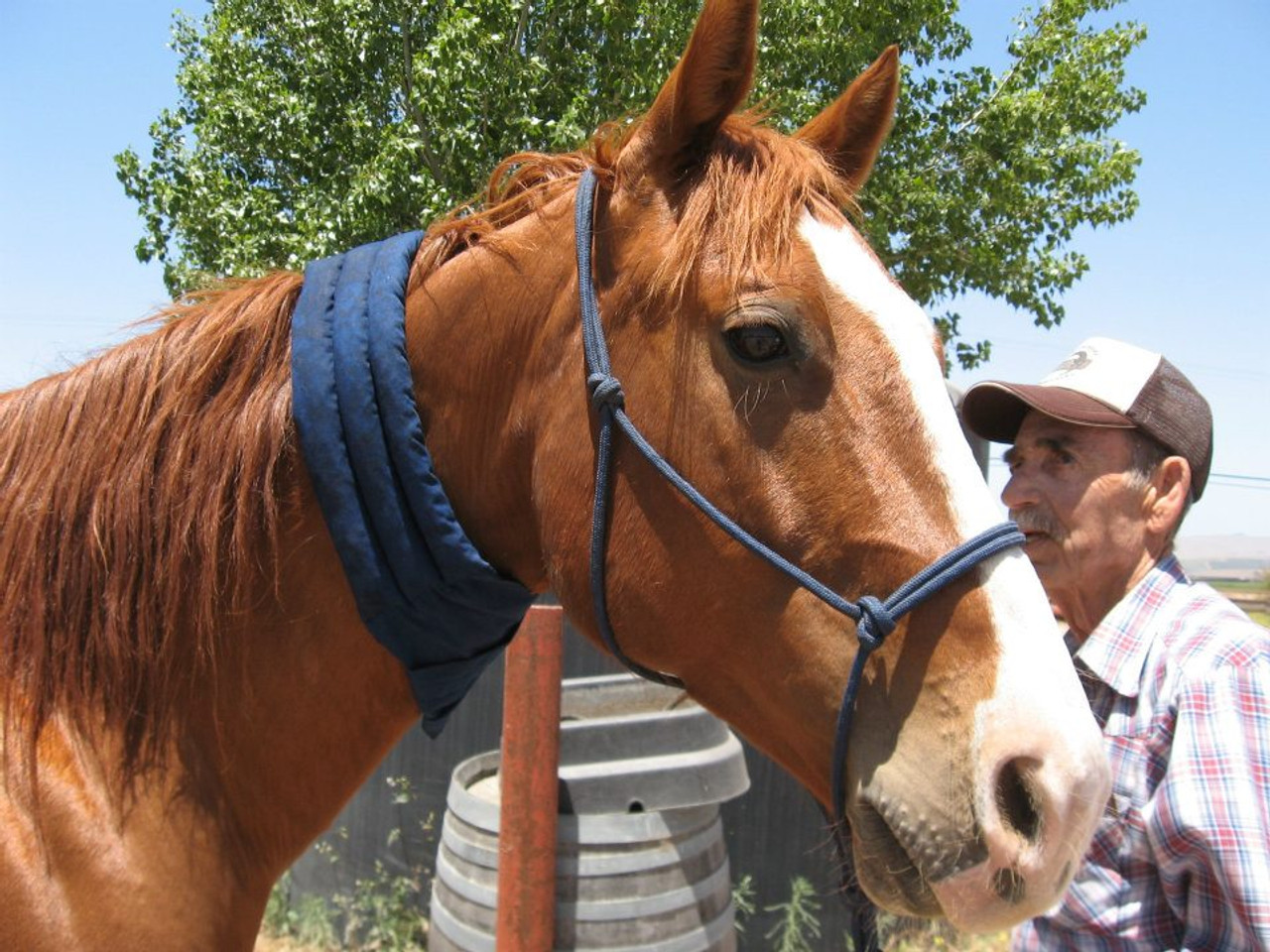 A cool wrap for horses to beat heat stress.
