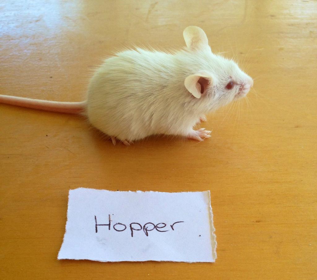 Frozen Hopper Mice - 7 pack