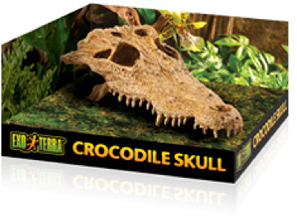 Crocodile skull ornament for reptiles