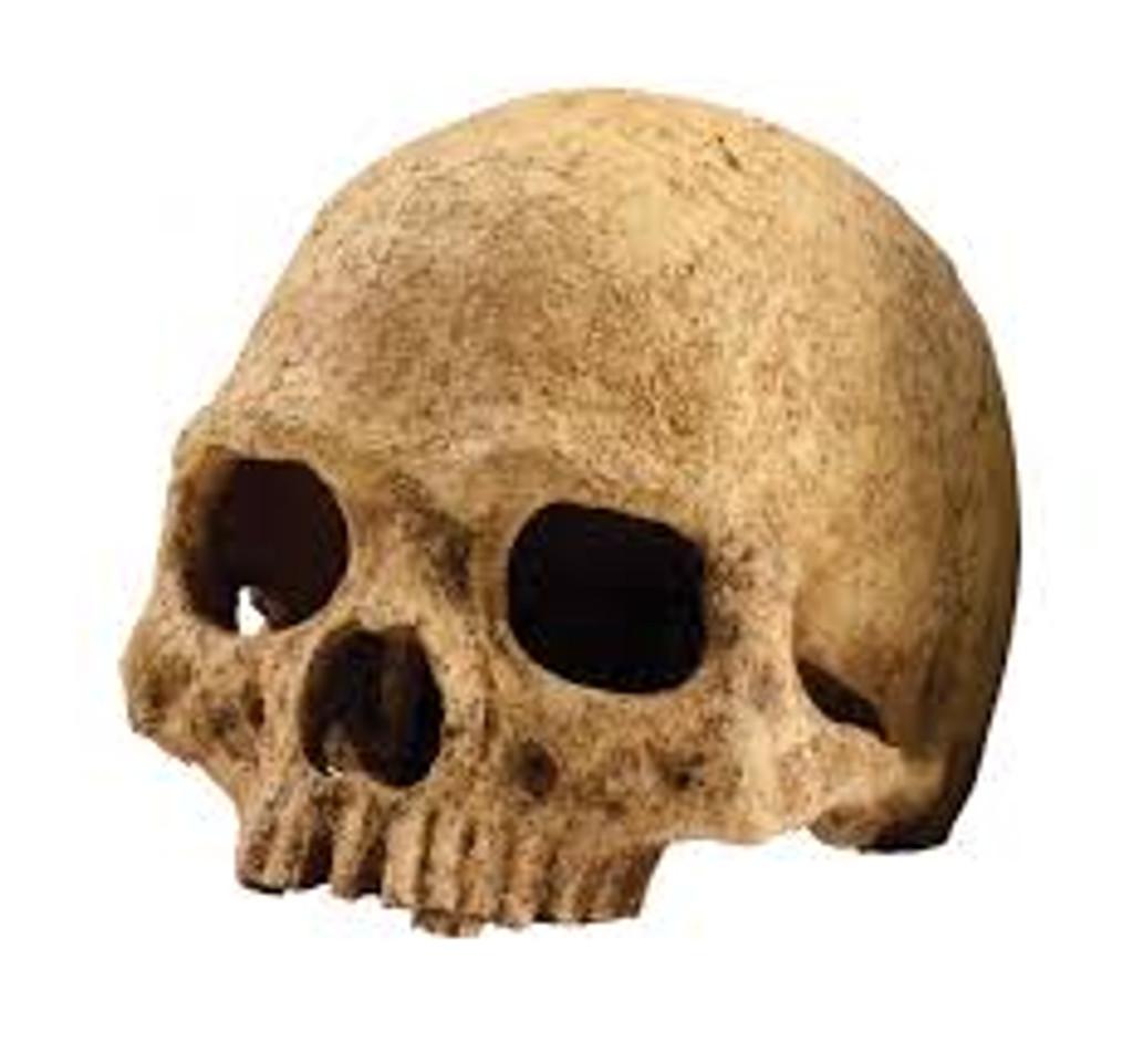 Primate skull ornament Exo Terra