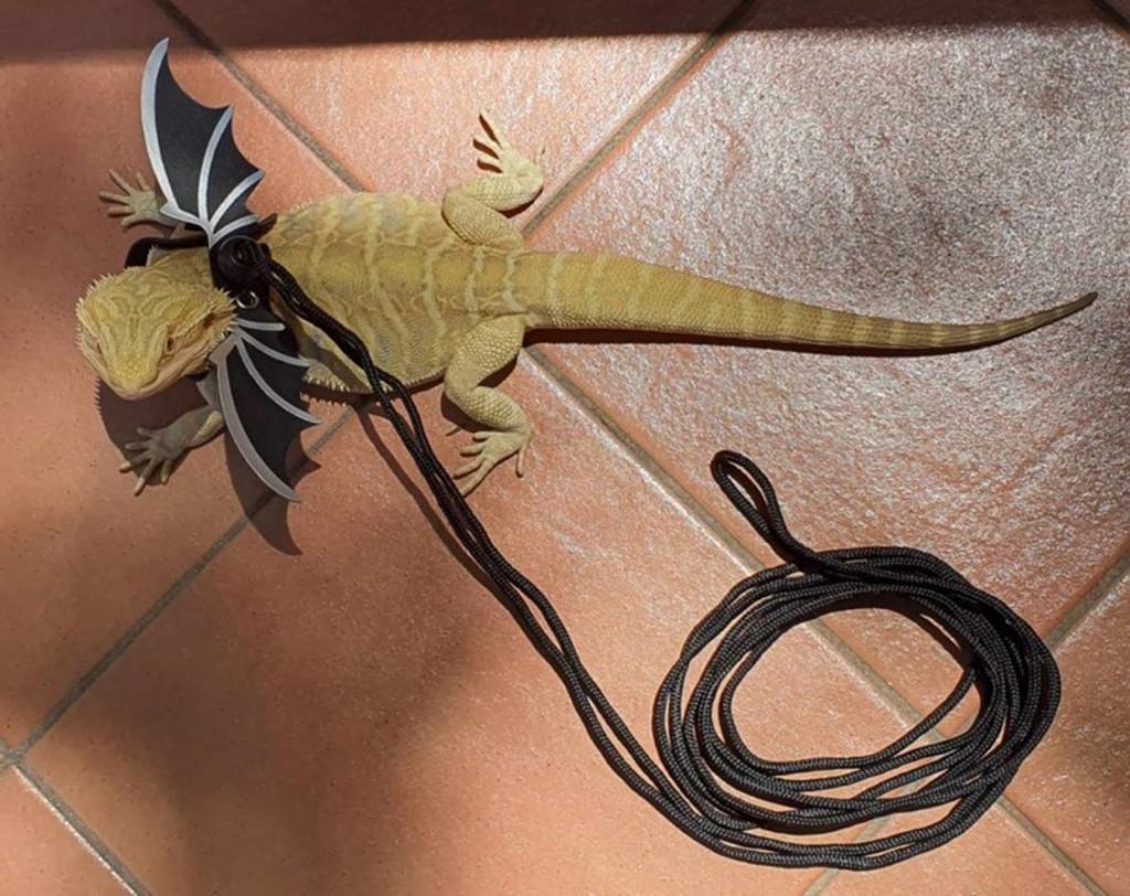 lizard harness and lead