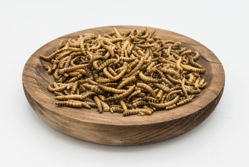 Dried mealworms 100gms Chook lizard bird fish turtle food