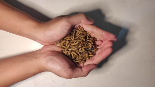 Dried Black Soldier Fly Larvae 50gm