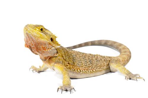 Reptile heating and lighting maintenance