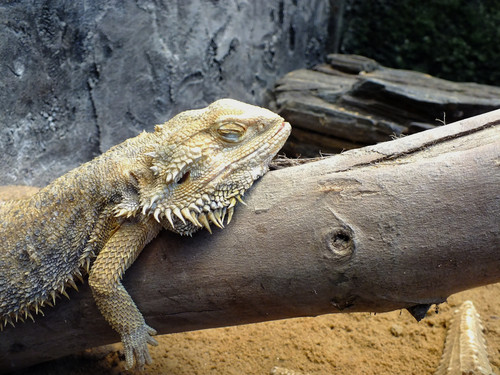 Winter Care for your pet reptiles