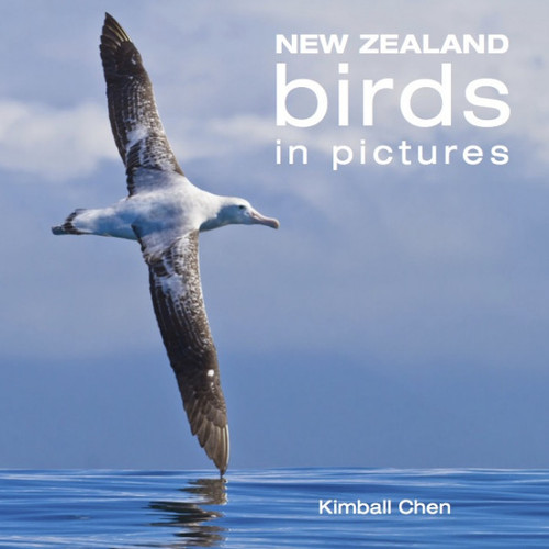 New Zealand Birds in Pictures