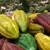 ORIGIN CACAO : Honduras