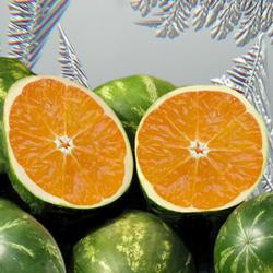 Orange-Melo Chill