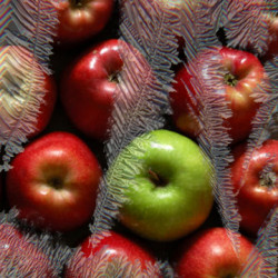 Pure ICE Apple