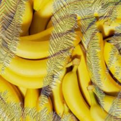 Pure ICE Banana