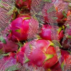 Pure ICE Dragonfruit