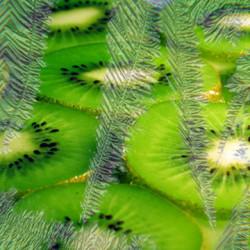 Pure ICE Kiwi